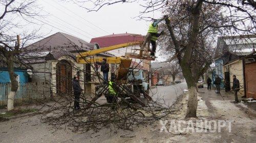 В Хасавюрте проводятся работы по омолаживанию деревьев