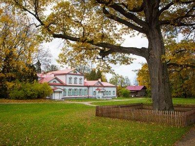 250- летний Абрамцевский дуб борется за звание Европейского дерева