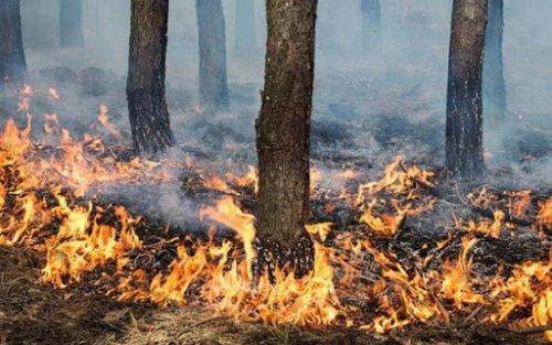 Внимание! На территории города Хасавюрт высокая пожароопасность 5 класса